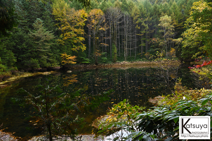 五色ヶ原の森 シラビソコース 雌池