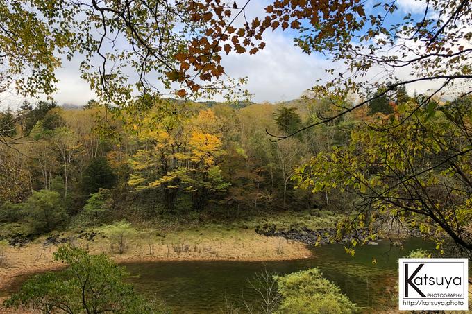 五色ヶ原の森 シラビソコース 雄池