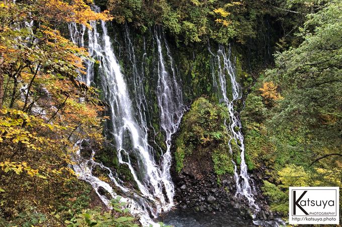 五色ヶ原の森 シラビソコース 布引の滝